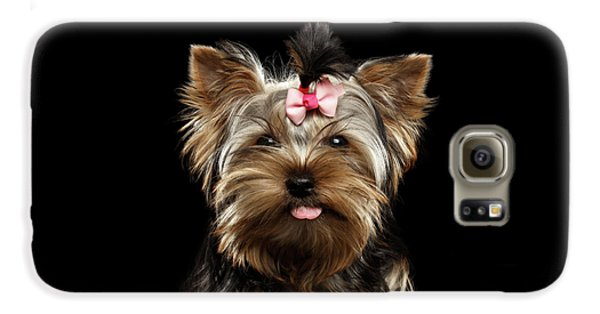 Closeup Portrait Of Yorkshire Terrier Dog On Black Background Galaxy S6 Case
