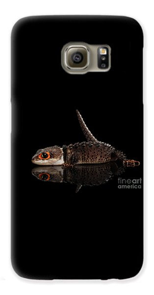 Closeup Red-eyed Crocodile Skink, Tribolonotus Gracilis, Isolated On Black Background Galaxy S6 Case by Sergey Taran