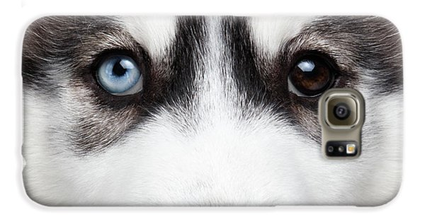Dog Galaxy S6 Case - Closeup Siberian Husky Puppy Different Eyes by Sergey Taran