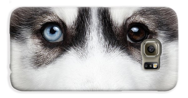 Closeup Siberian Husky Puppy Different Eyes Galaxy S6 Case by Sergey Taran