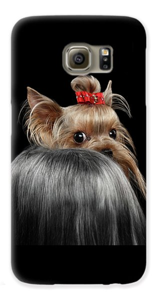Dog Galaxy S6 Case -  Closeup Yorkshire Terrier Dog, Long Groomed Hair Pity Looking Back by Sergey Taran