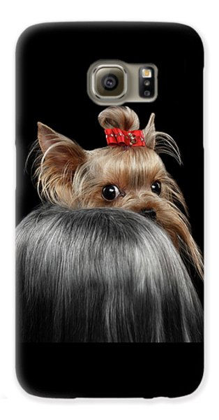 Closeup Yorkshire Terrier Dog, Long Groomed Hair Pity Looking Back Galaxy S6 Case by Sergey Taran
