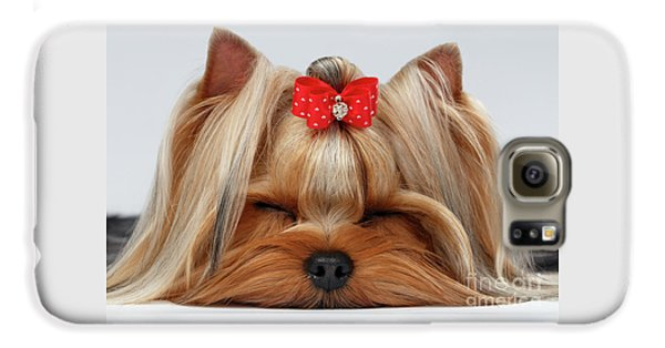 Closeup Yorkshire Terrier Dog With Closed Eyes Lying On White  Galaxy S6 Case by Sergey Taran