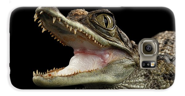 Closeup Young Cayman Crocodile, Reptile With Opened Mouth Isolated On Black Background Galaxy S6 Case by Sergey Taran
