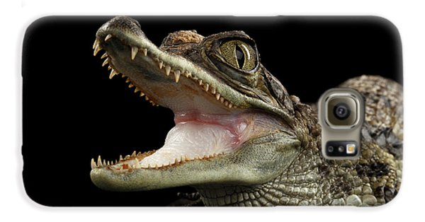 Closeup Young Cayman Crocodile, Reptile With Opened Mouth Isolated On Black Background Galaxy S6 Case