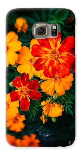 Galaxy S6 Case featuring the photograph Colorful Flowers by Silvia Ganora