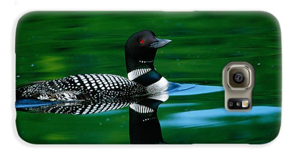 Common Loon In Water, Michigan, Usa Galaxy S6 Case by Panoramic Images
