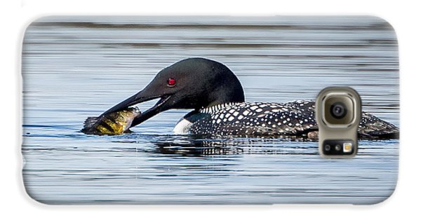 Common Loon Square Galaxy S6 Case by Bill Wakeley
