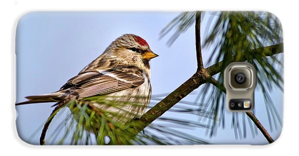 Galaxy S6 Case featuring the photograph Common Redpoll Bird by Christina Rollo