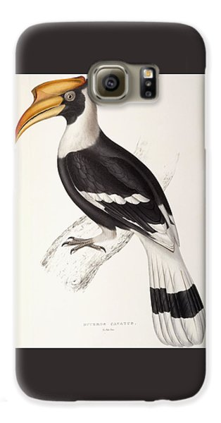 Hornbill Galaxy S6 Case - Concave Hornbill by John Gould