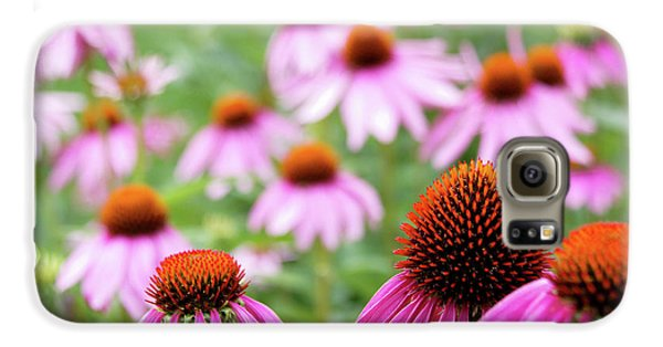 Coneflowers Galaxy S6 Case by David Chandler