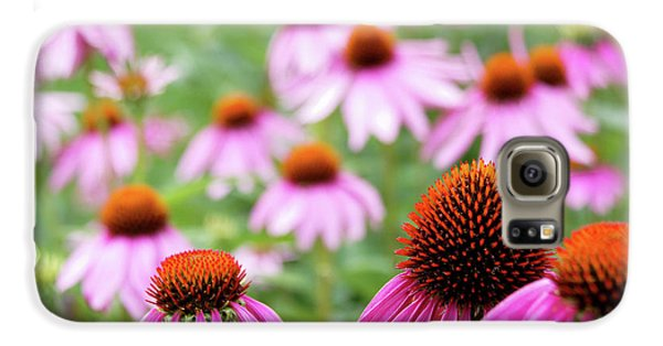 Coneflowers Galaxy S6 Case