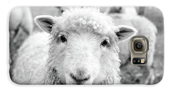 Sheep Galaxy S6 Case - Contentment by Pixabay
