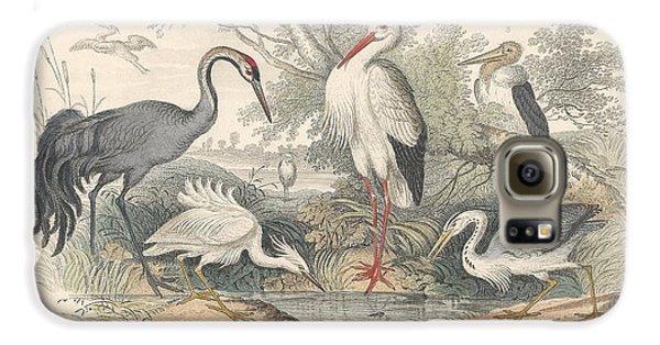Stork Galaxy S6 Case - Cranes by Dreyer Wildlife Print Collections