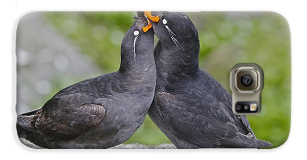 Crested Auklet Pair Galaxy S6 Case