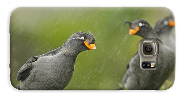 Crested Auklets Galaxy S6 Case