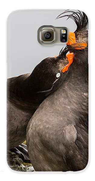 Crested Auklets Galaxy S6 Case by Sunil Gopalan