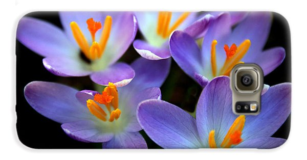 Galaxy S6 Case featuring the photograph Crocus Aglow by Jessica Jenney