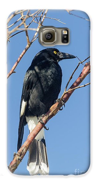 Currawong Galaxy S6 Case