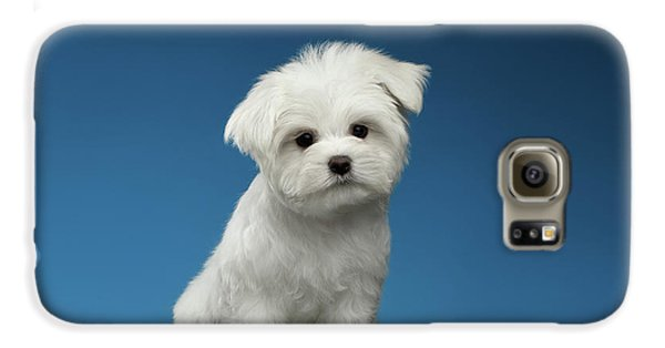 Cute Pure White Maltese Puppy Standing And Curiously Looking In Camera Isolated On Blue Background Galaxy S6 Case by Sergey Taran