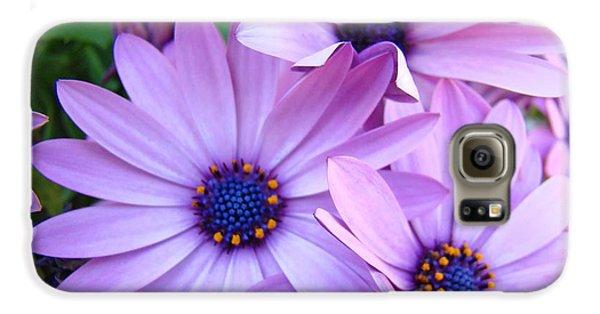 Daisies Lavender Purple Daisy Flowers Baslee Troutman Galaxy S6 Case