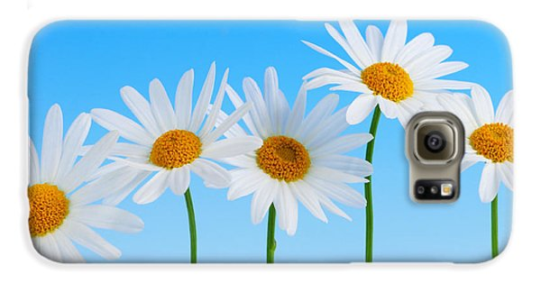 Daisy Galaxy S6 Case - Daisy Flowers On Blue by Elena Elisseeva