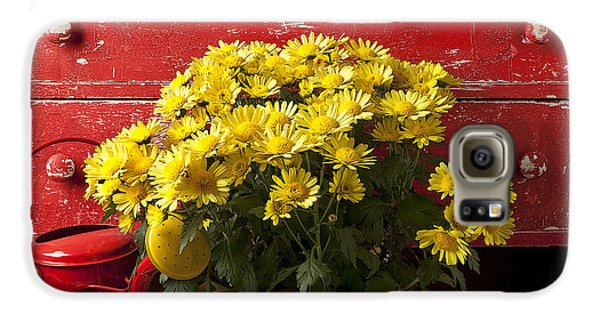 Daisy Plant In Drawers Galaxy S6 Case by Garry Gay
