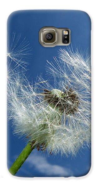 Dandelion And Blue Sky Galaxy S6 Case