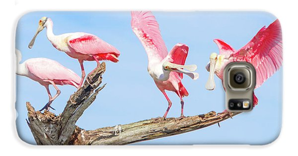 Day Of The Spoonbill  Galaxy S6 Case by Mark Andrew Thomas
