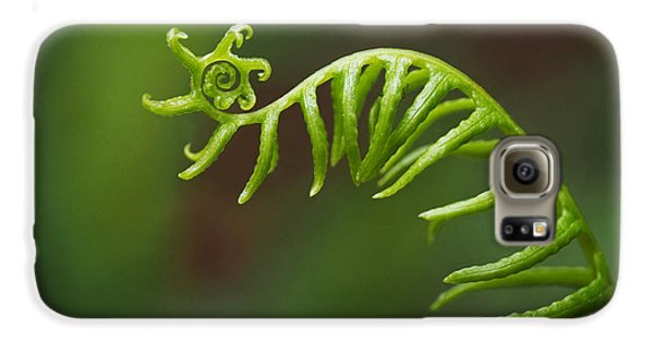 Delicate Fern Frond Spiral Galaxy S6 Case