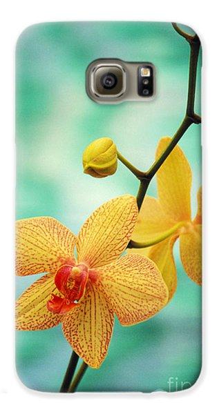 Orchid Galaxy S6 Case - Dendrobium by Allan Seiden - Printscapes