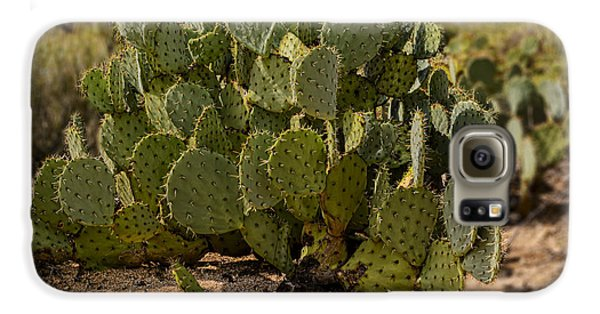 Desert Prickly-pear No6 Galaxy S6 Case by Mark Myhaver