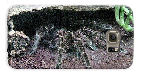 Desert Tarantula Galaxy S6 Case