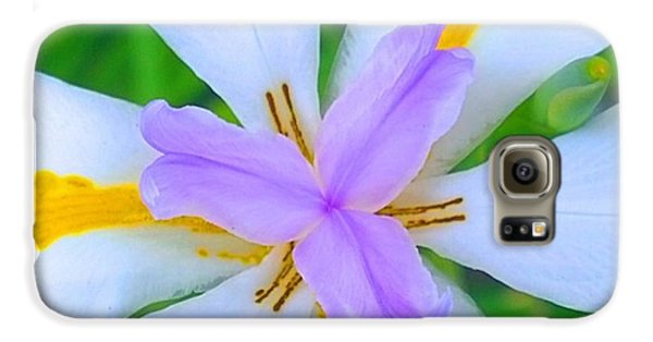 Design Galaxy S6 Case - Devine #design By #mothernature :-) by Shari Warren