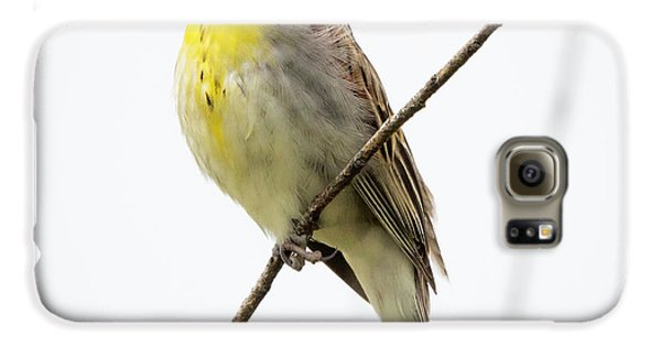Dickcissel  Galaxy S6 Case