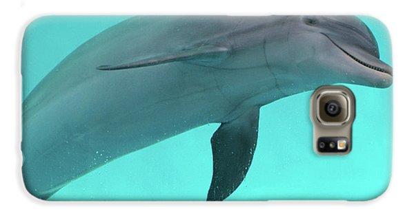 Dolphin Galaxy S6 Case by Sandy Keeton