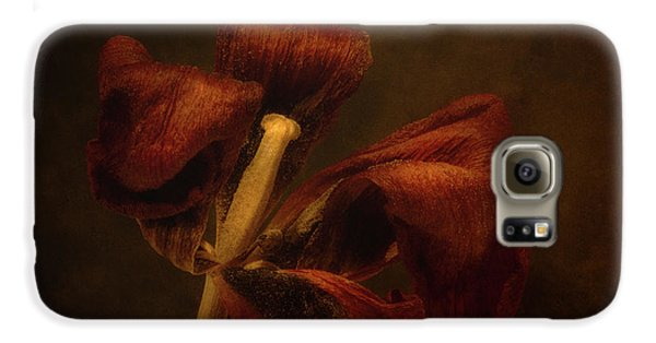 Tulip Galaxy S6 Case - Dried Tulip Blossom 2 by Scott Norris
