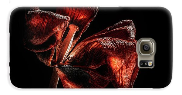 Tulip Galaxy S6 Case - Dried Tulip Blossom by Scott Norris