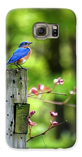 Eastern Bluebird Galaxy S6 Case