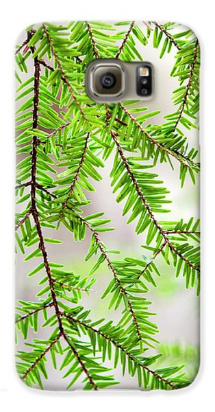 Eastern Hemlock Tree Abstract Galaxy S6 Case by Christina Rollo