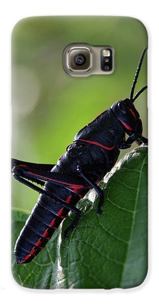 Eastern Lubber Grasshopper Galaxy S6 Case by Richard Rizzo