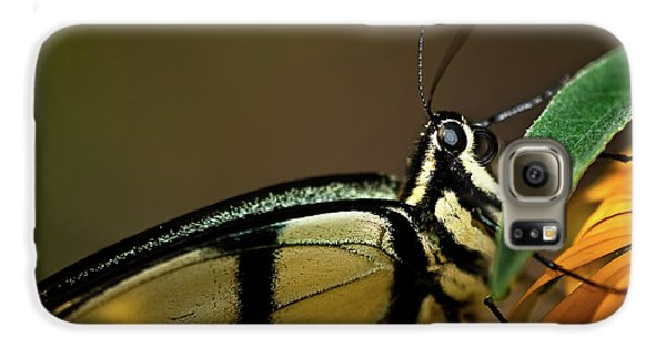 Eastern Tiger Swallowtail Butterfly Galaxy S6 Case by  Onyonet  Photo Studios