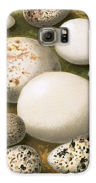 Eggs Galaxy S6 Case