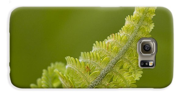 Elegant Fern. Galaxy S6 Case