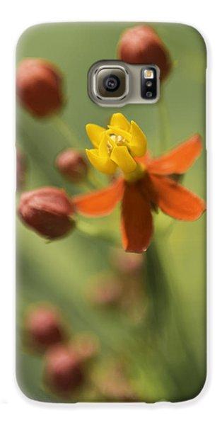 Emergence - Asclepias Curassavica - Butterfly Milkweed - South Carolina Botanical Gardens Galaxy S6 Case by Johan Hakansson