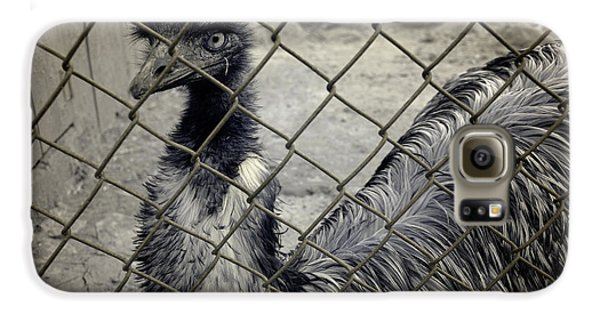 Emu At The Zoo Galaxy S6 Case by Luke Moore