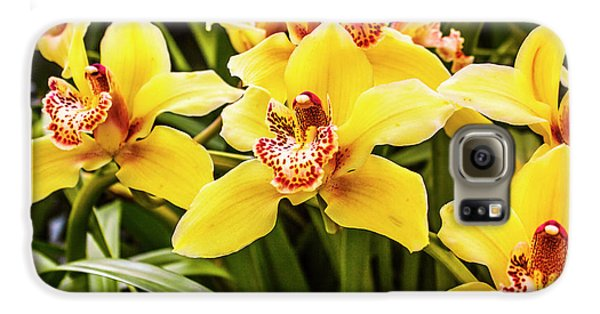 Orchid Galaxy S6 Case - Exotic Orchids  by Jorgo Photography - Wall Art Gallery