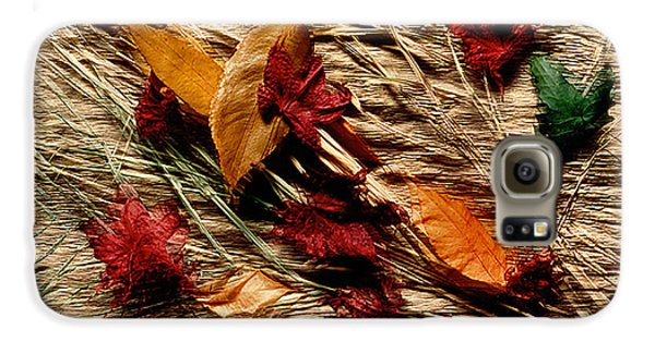 Fall Foliage Still Life Galaxy S6 Case