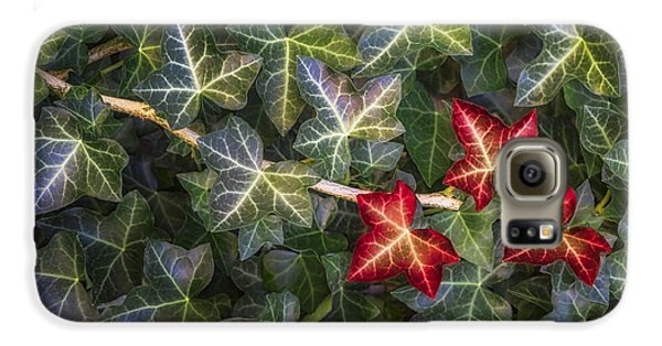 Galaxy S6 Case featuring the photograph Fall Ivy Leaves by Adam Romanowicz
