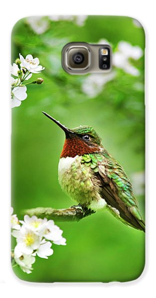 Fauna And Flora - Hummingbird With Flowers Galaxy S6 Case by Christina Rollo